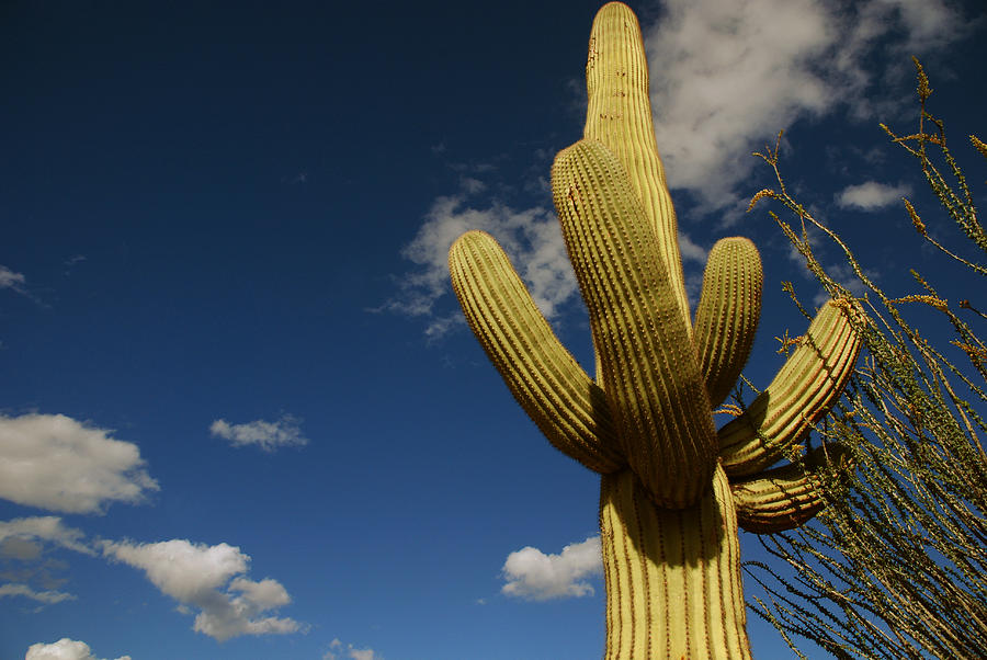 Saguaro Photograph - Up To The Sky by Susanne Van Hulst