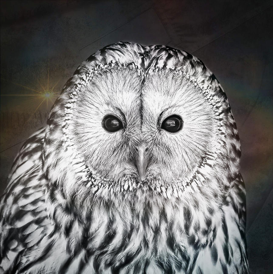 Animal Photograph - Ural Owl 1 by Tom Gowanlock