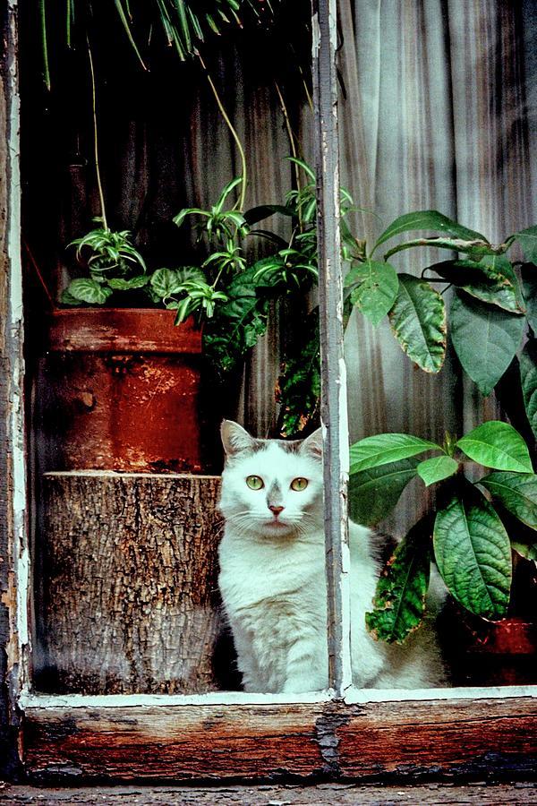 New York Photograph - Village Cat by Jeff Watts
