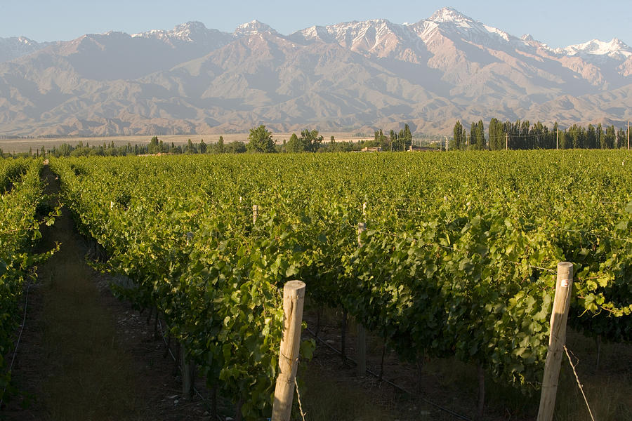 Argentina Photograph - Vineyards In The Mendoza Valley by Michael S. Lewis