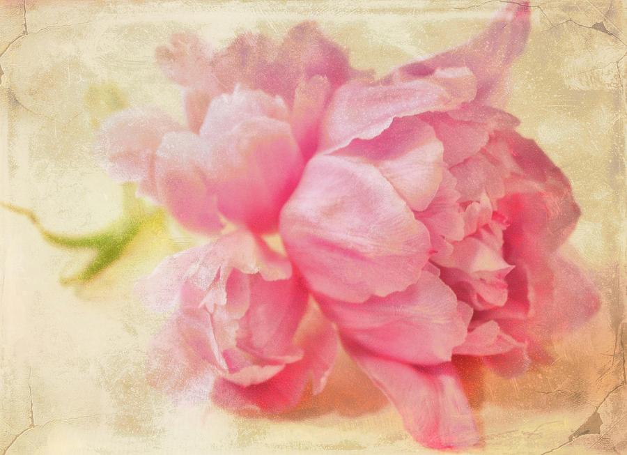 Peonies Photograph - Vintage Pink by Cathie Tyler