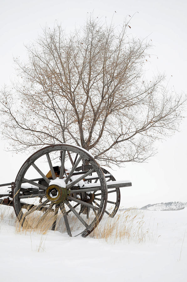 Wagon Photograph - Wagon In The Snow by Dave Rennie