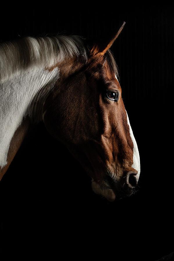 Horse Photograph - Warmblood by Samuel Whitton