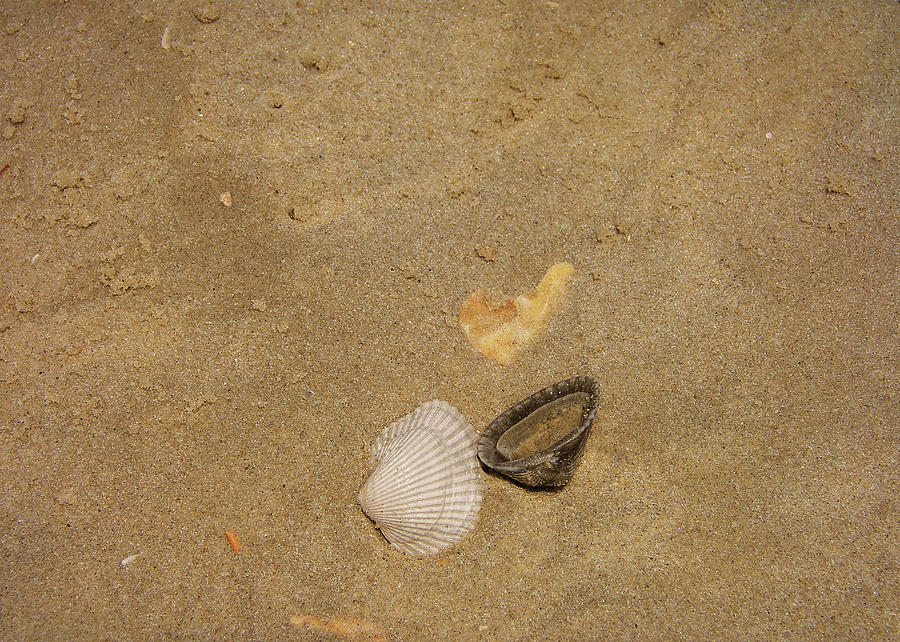 Beach Photograph - Shells Washed Ashore by JAMART Photography