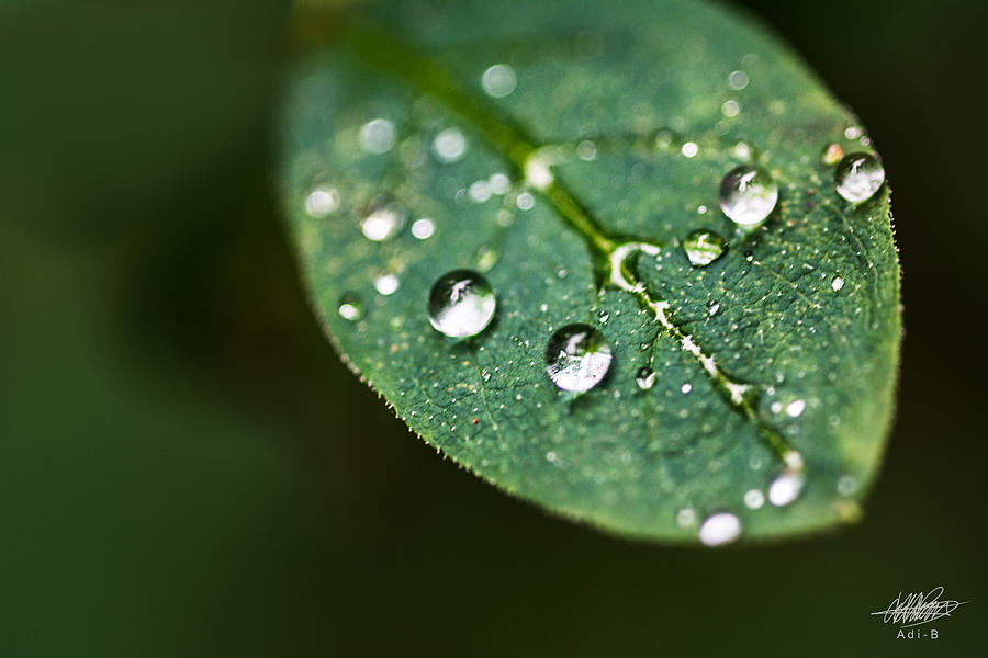 Nature Photograph - Water Droplets by Adnan Bhatti