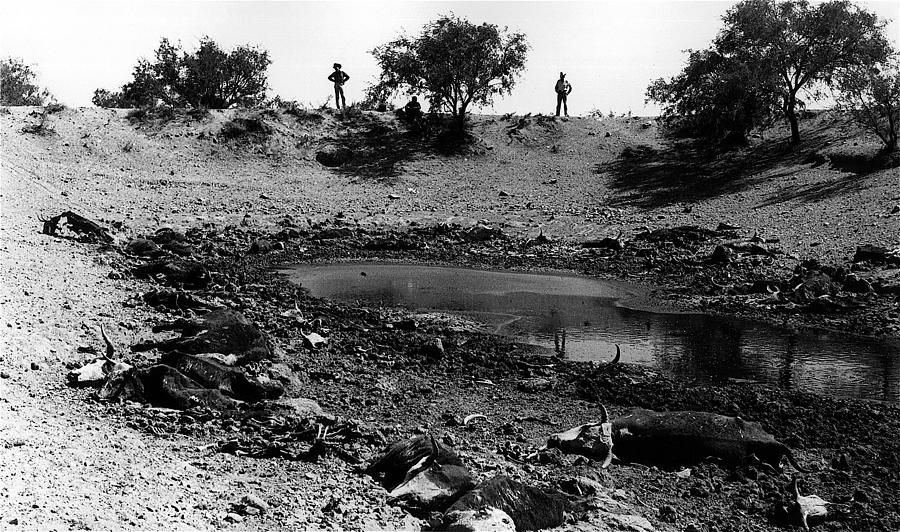 Water Hole Dead Cattle Cowboys  Drought Tohono Oodham Indian Reservation Near Sells Az 1969 Photograph by David Lee Guss