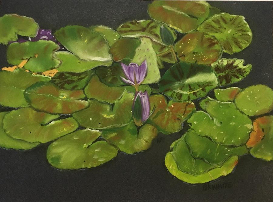 Water Lilies by Brian White