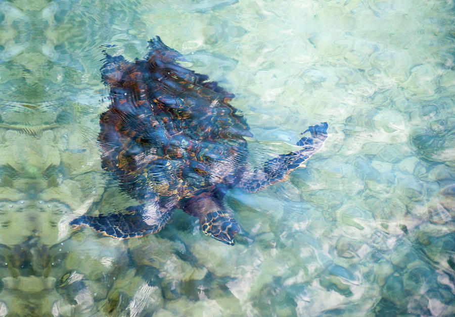 Watercolor Turtle by Denise Bird