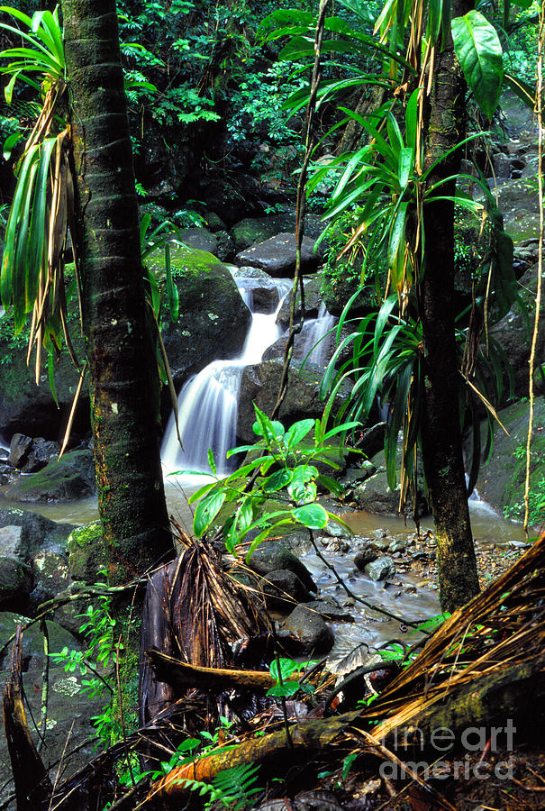 Puerto Rico Photograph - Waterfall El Yunque National Forest by Thomas R Fletcher