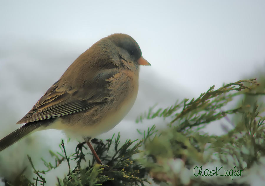 Bird Photograph - Weathering The Storm by Chuck Kugler