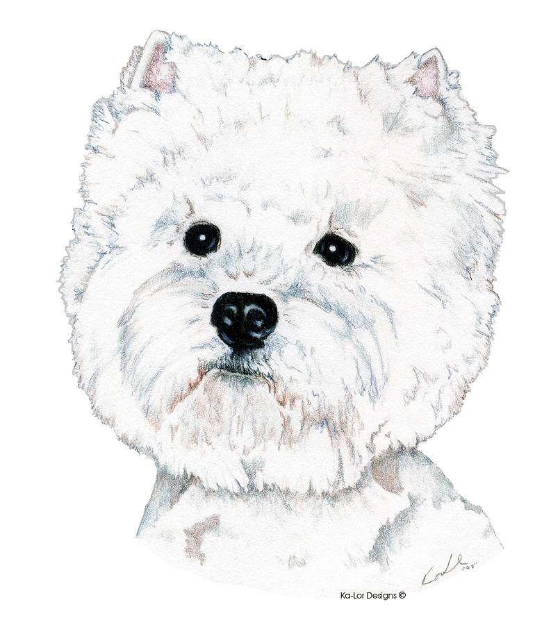 West Highland White Terrier Drawing - West Highland White Terrier, Westie by Kathleen Sepulveda