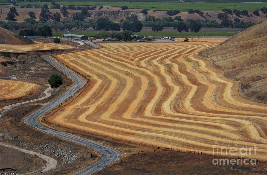 Wheat Field Photograph