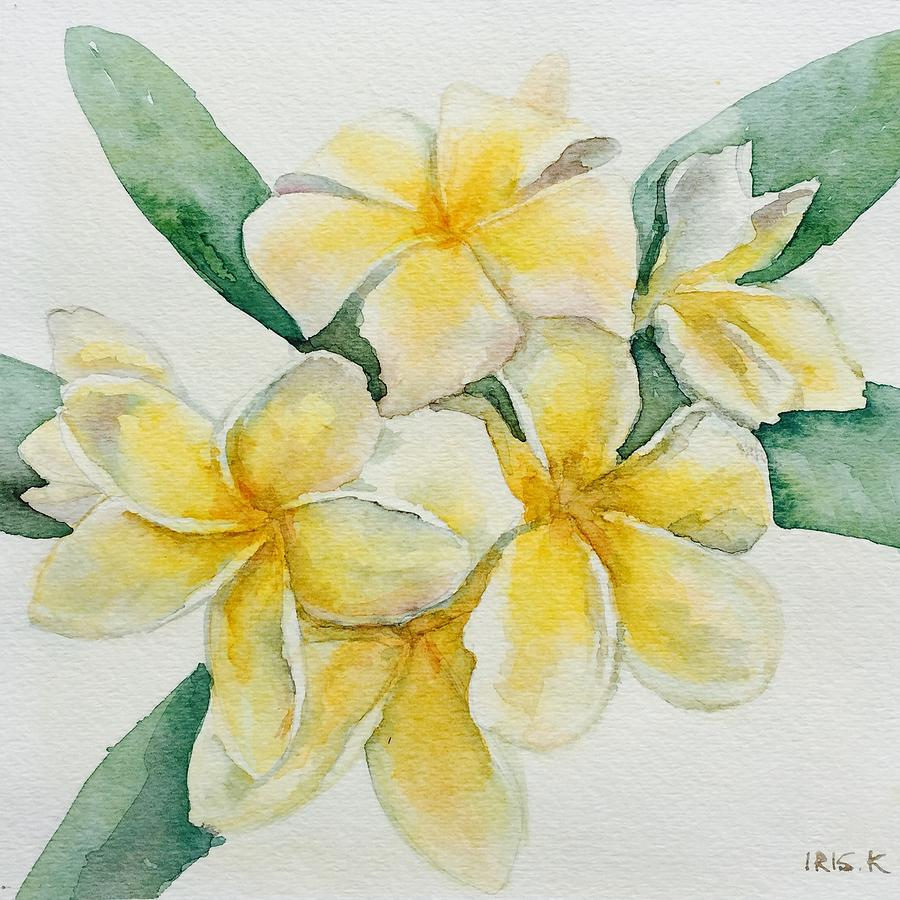 White And Yellow Plumerias Painting By Inga Risk