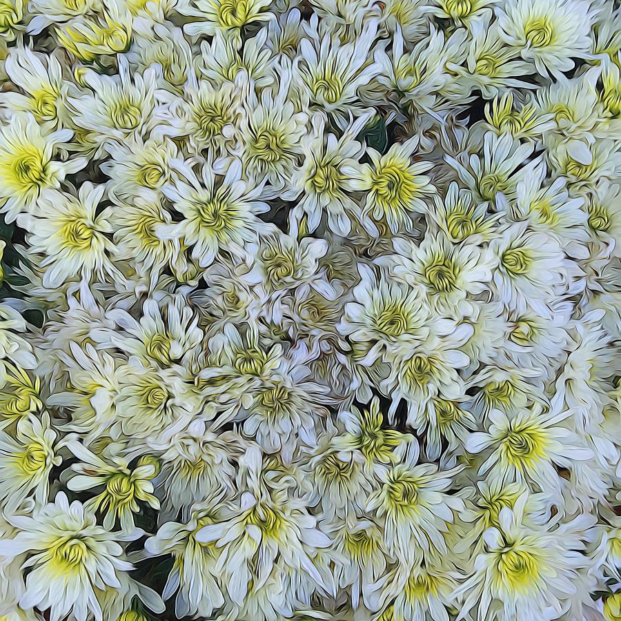 White Mums Photograph By Cindy Boyd