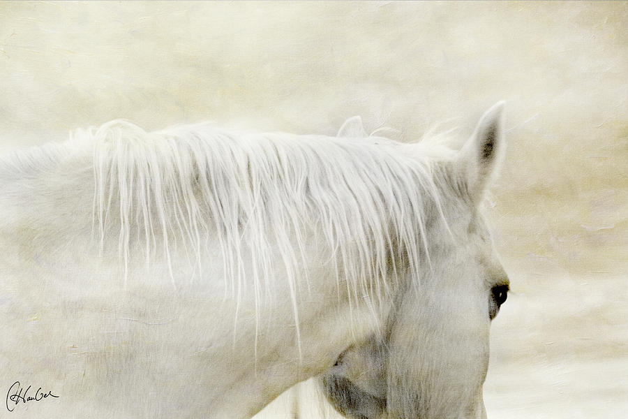 Equine Photograph - White On White by Christine Hauber