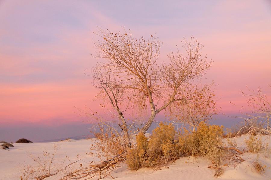 Alamogordo Photograph - White Sands Sunset 1 by Liza Eckardt