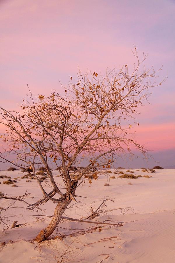 Alamogordo Photograph - White Sands Sunset 2 by Liza Eckardt