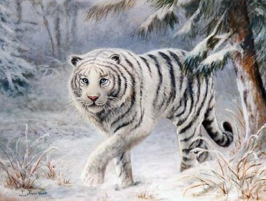 White Tiger Painting by Sharon Weaver