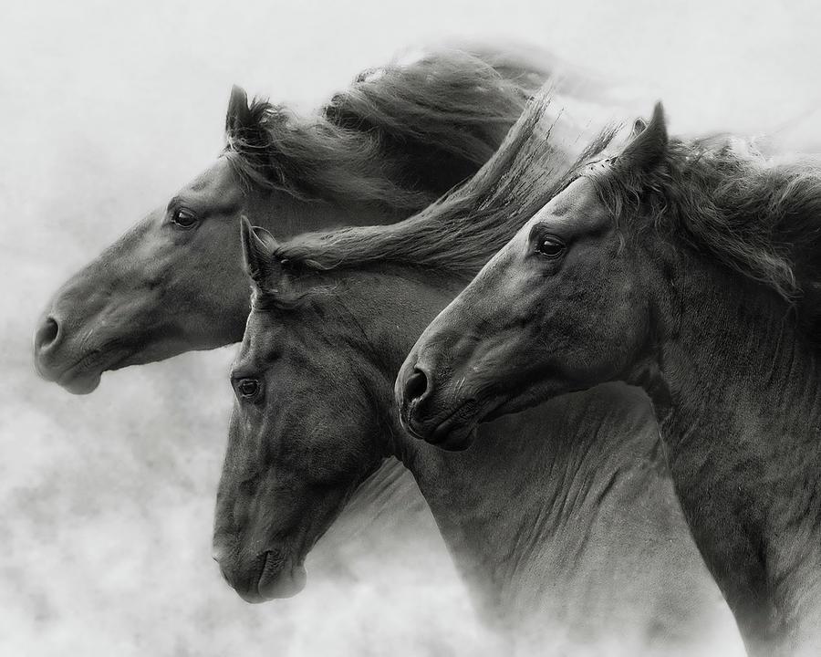 Wild Hearts by Ron McGinnis