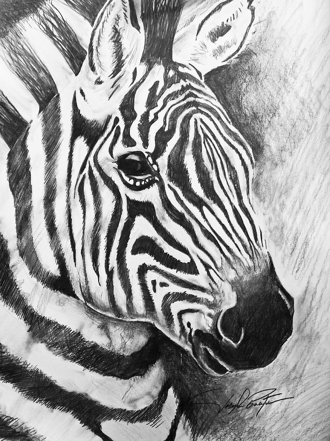 Wild Life Drawing - Wild Stripes by Joseph Palotas