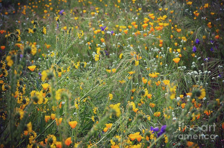 Wildflowers Photograph - Wildflowers by Kiana Carr