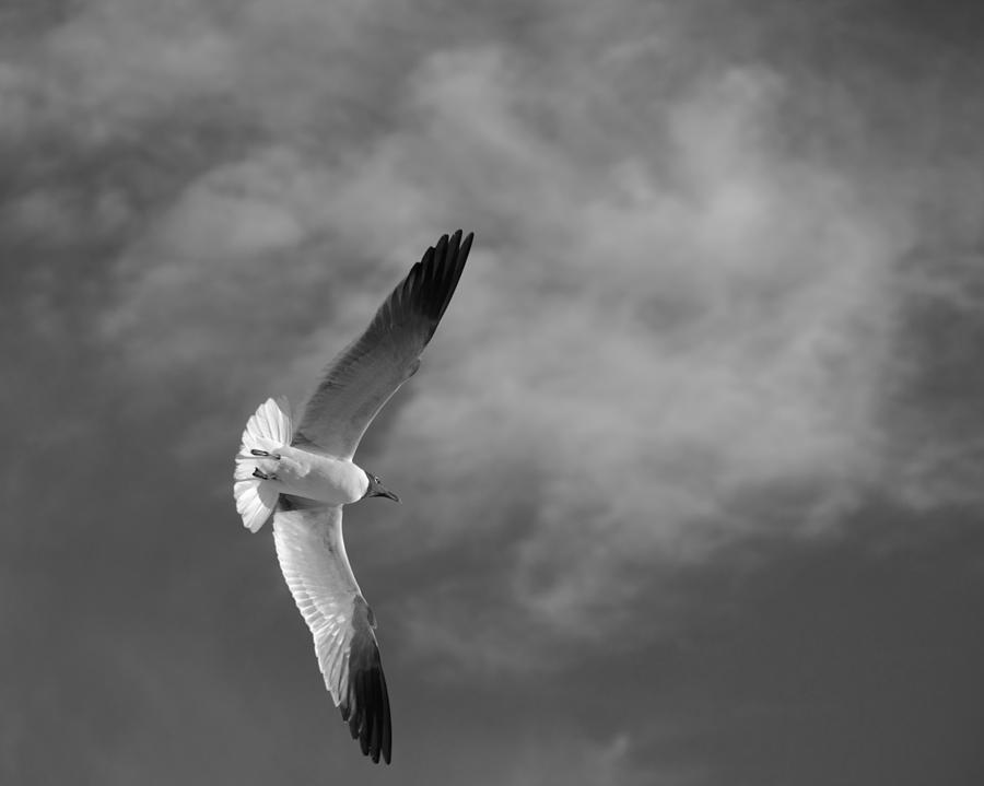 Seagull Photograph - Wings by Don Spenner