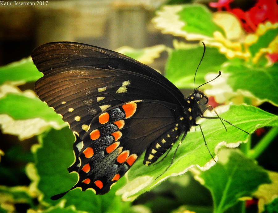Baltimore Photograph - Wings Of Fancy by Kathi Isserman