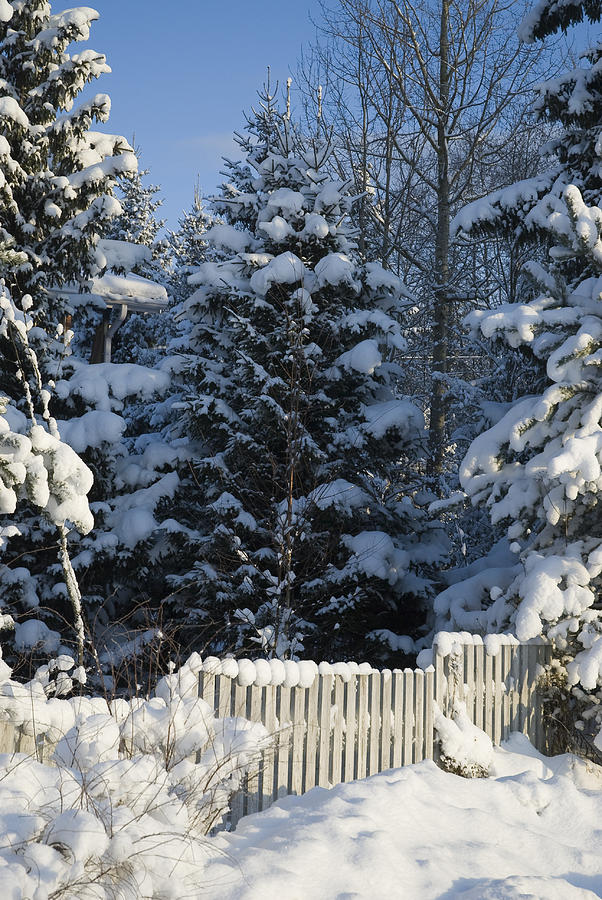 Winter Scenes Photograph - Winter by Igor Sinitsyn