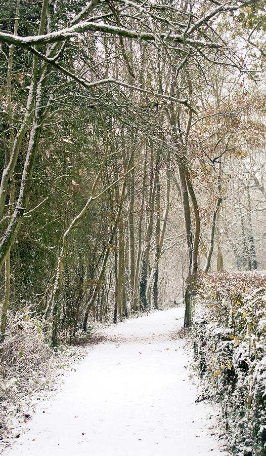 Countryside Photograph - Winter Journey by Andy Smy