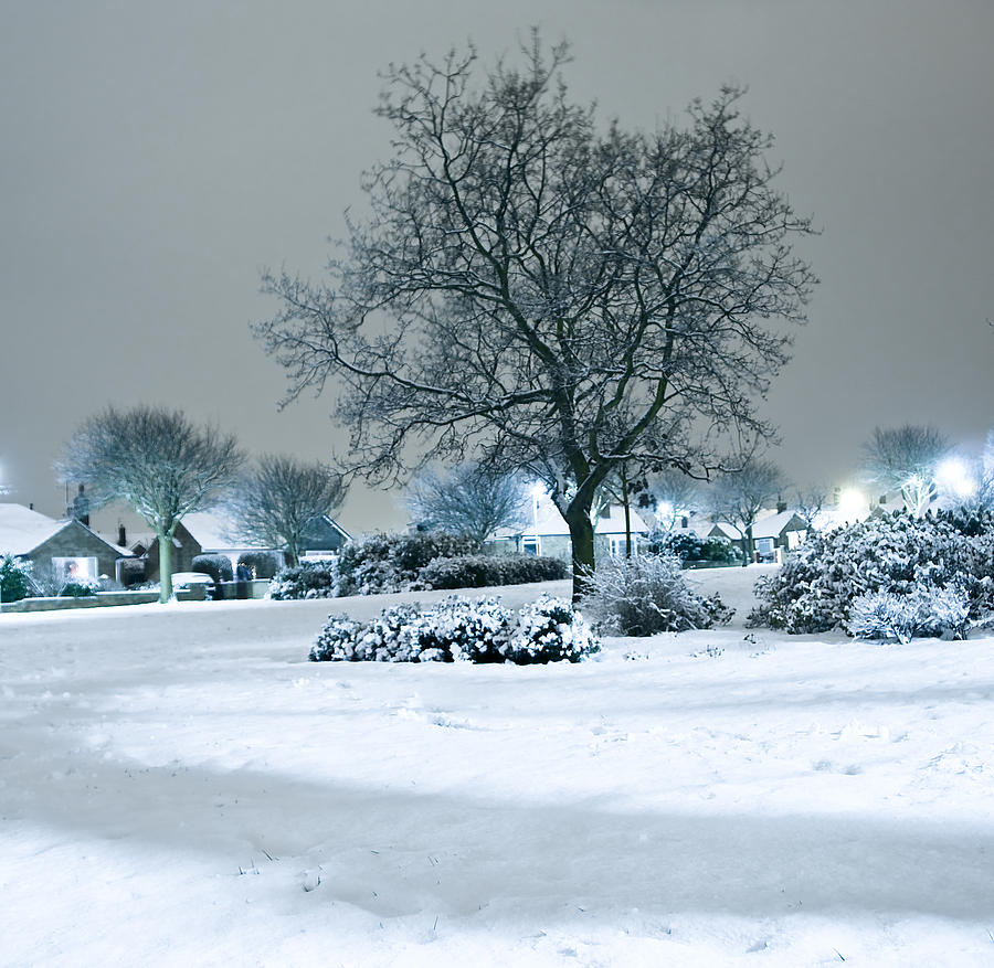 Winter Photograph - Winter by Svetlana Sewell