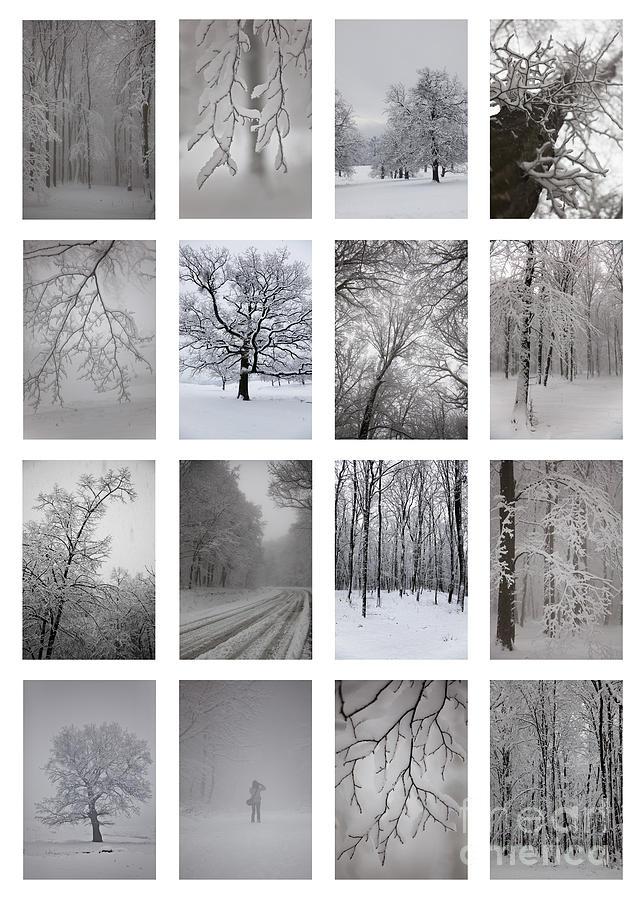 Winter Photograph - Winter Time by Gabriela Insuratelu