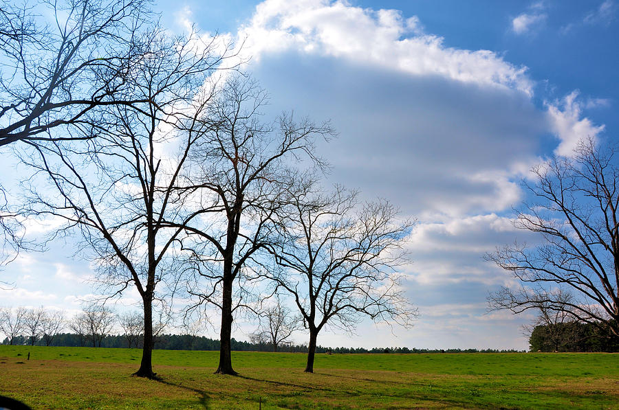 Landscapes Photograph - Winter Trees by Jan Amiss Photography
