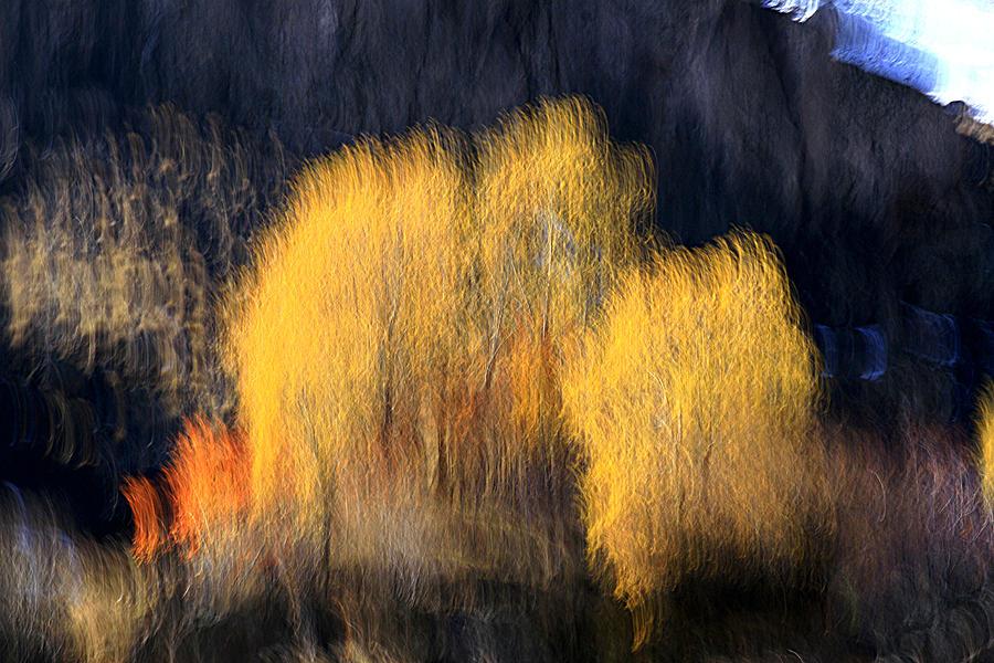 Autumn Photograph - Wizard by Robert Shahbazi