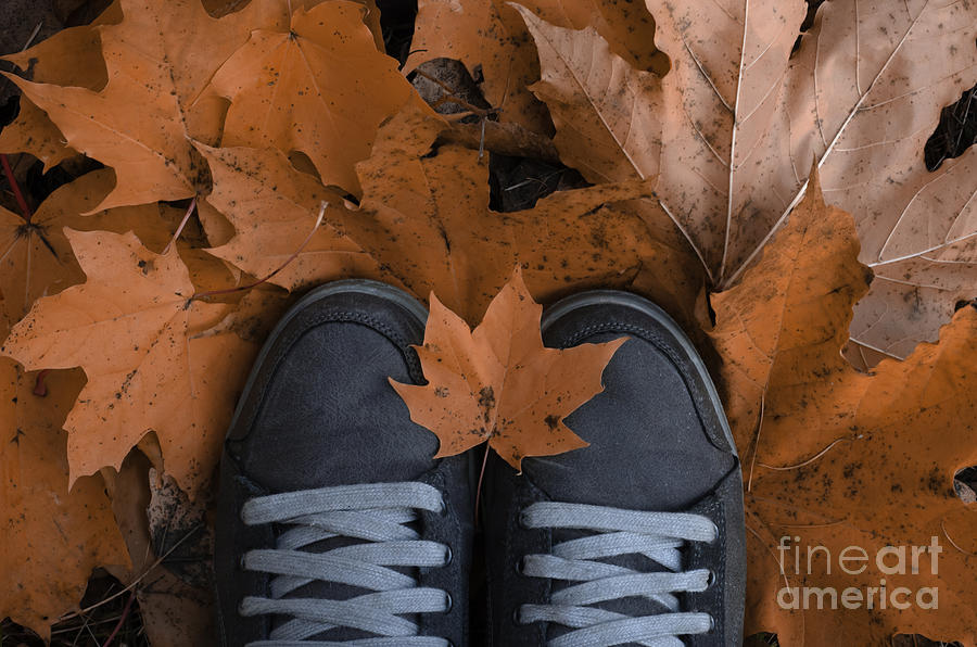 Falling Leaves Month Photograph