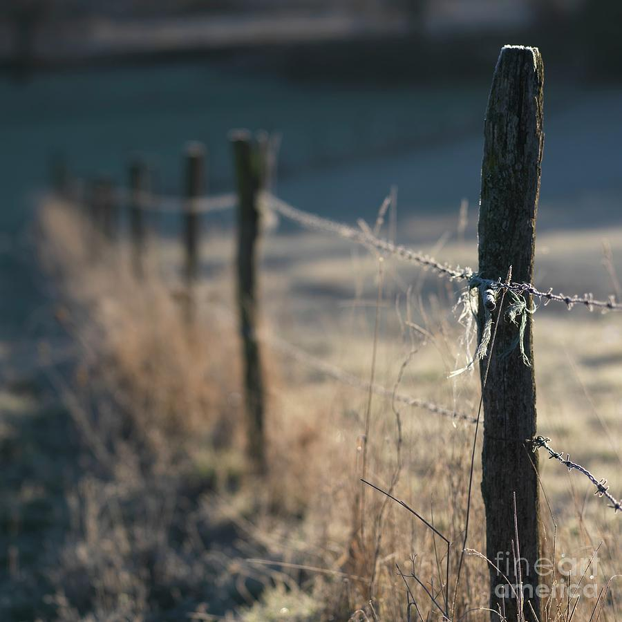 Barbed Wire Photograph - Wooden Posts by Bernard Jaubert