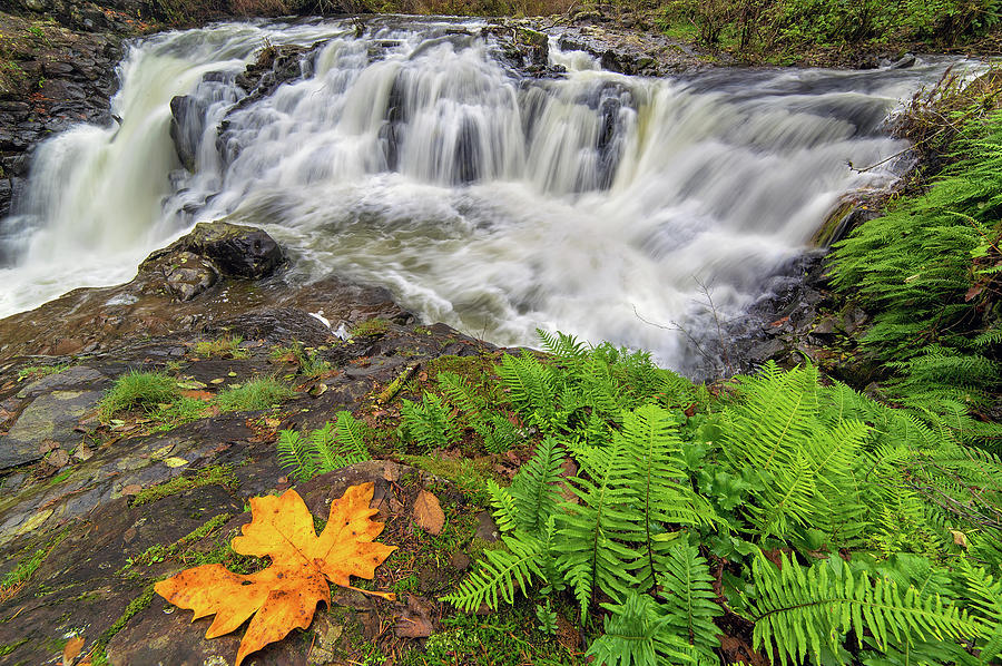Waterfall Photograph - Yacolt Falls In Autumn by David Gn
