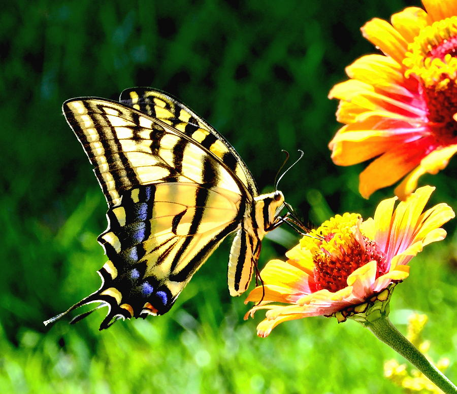 Yellow Butterfly On Flower Photograph