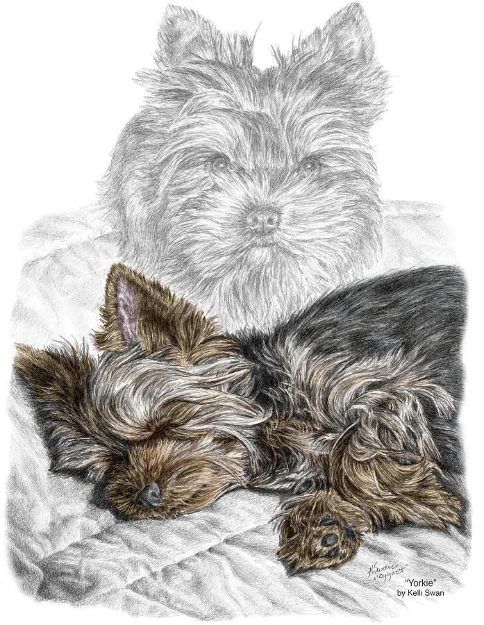 Yorkie - Yorkshire Terrier Dog Print by Kelli Swan