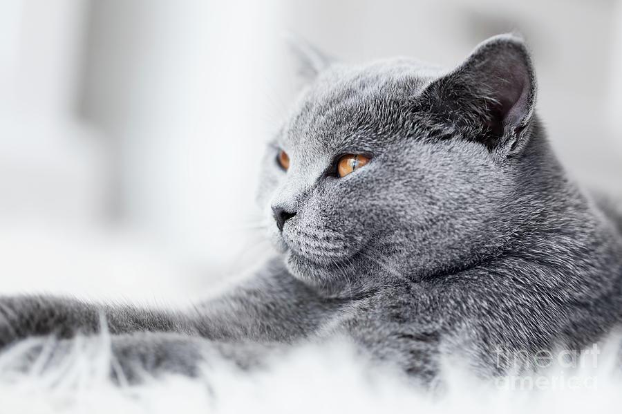 Cat Photograph - Young cute cat close-up portrait by Michal Bednarek