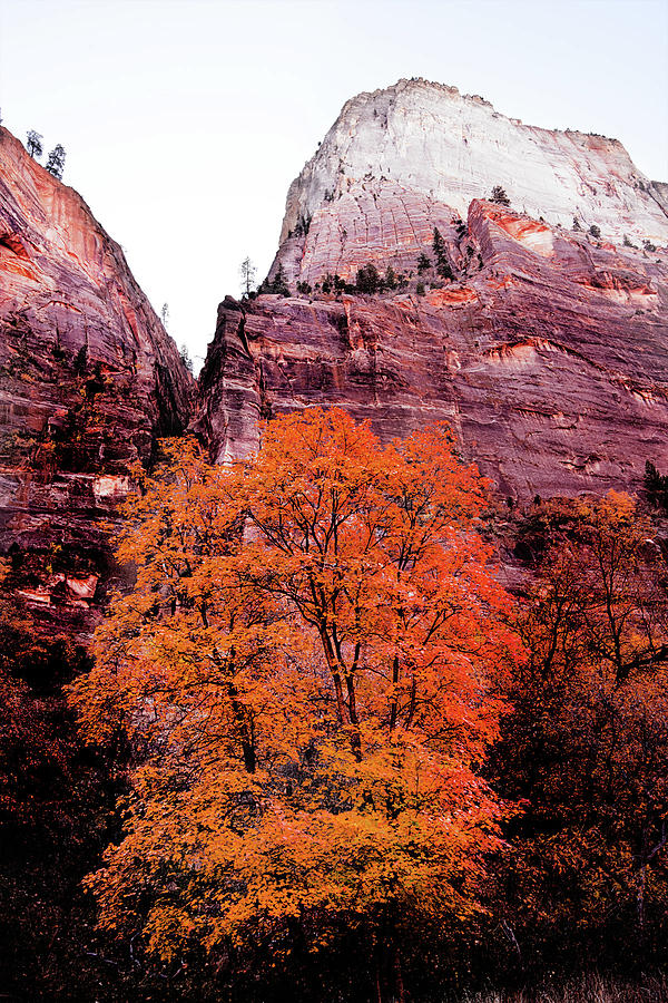 Zion National Park Photograph - Zion National park by Norman Hall