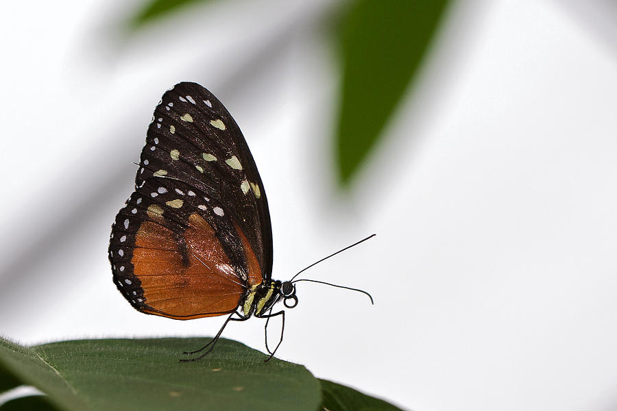 Butterfly Photograph - Butterfly by Theo Tan