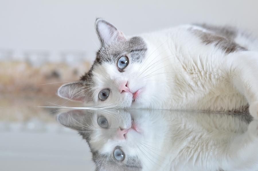 Cat Digital Art - Cat by Dorothy Binder
