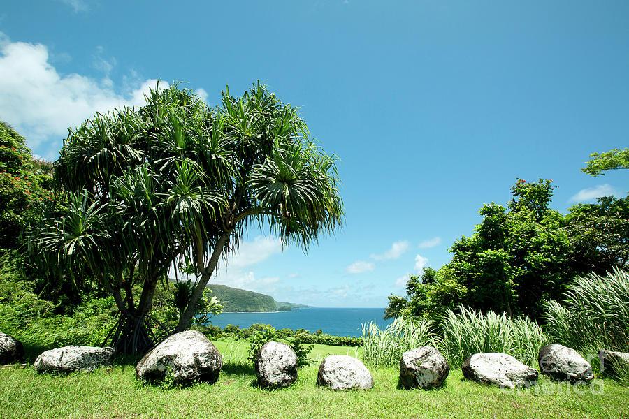 Maui Photograph - Keanae Maui Hawaii by Sharon Mau