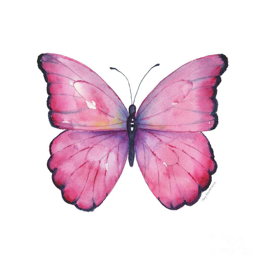 105 Pink Celestina Butterfly by Amy Kirkpatrick