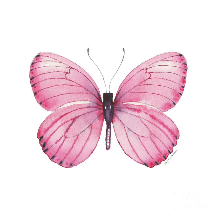106 Pink Marcia Butterfly Painting