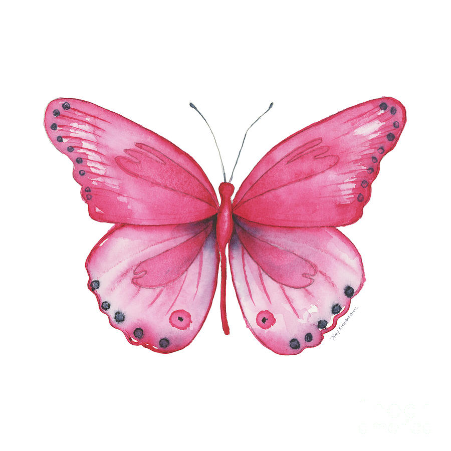 107 Pink Genus Butterfly by Amy Kirkpatrick