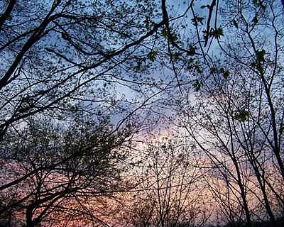 Sky Photograph - Sky At Dawn by Suzette Eichenberg