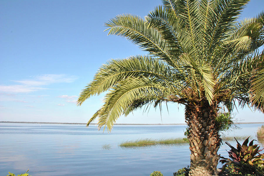 10740 Paradise Palm by Pamela Williams