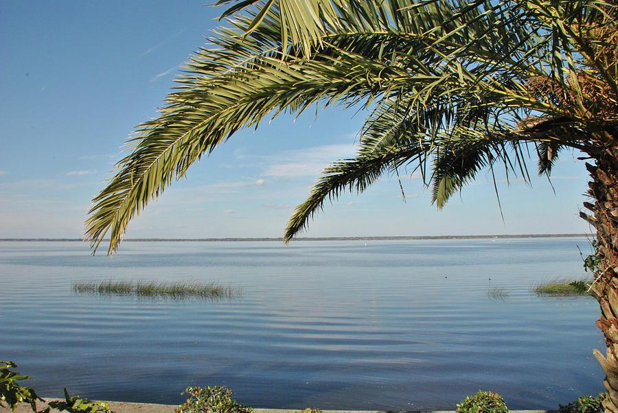 10741 Paradise Palm Photograph