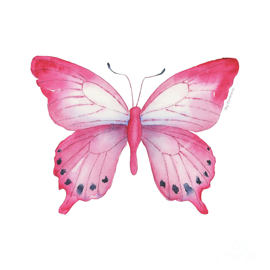 108 Pink Laglaizei Butterfly by Amy Kirkpatrick